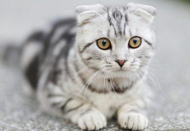 Kedi Kısırlaştırma Ve Zorlukları